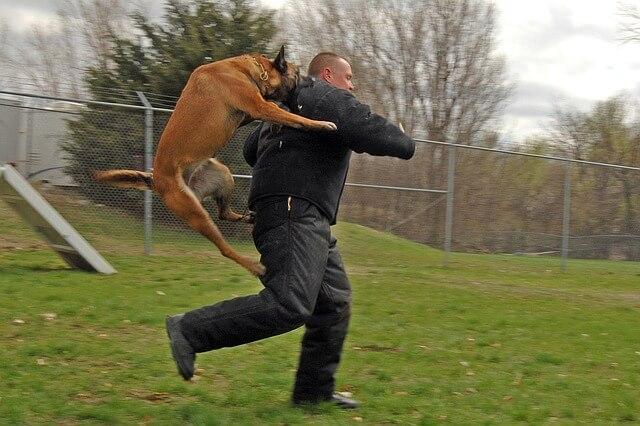 Arizona Dog Bites & Attacks: Can I bring a claim against the dog's owner?